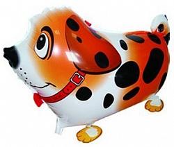 Шар (24''/61 см) Ходячая Фигура, Собака далматин, Оранжевый, 1 шт