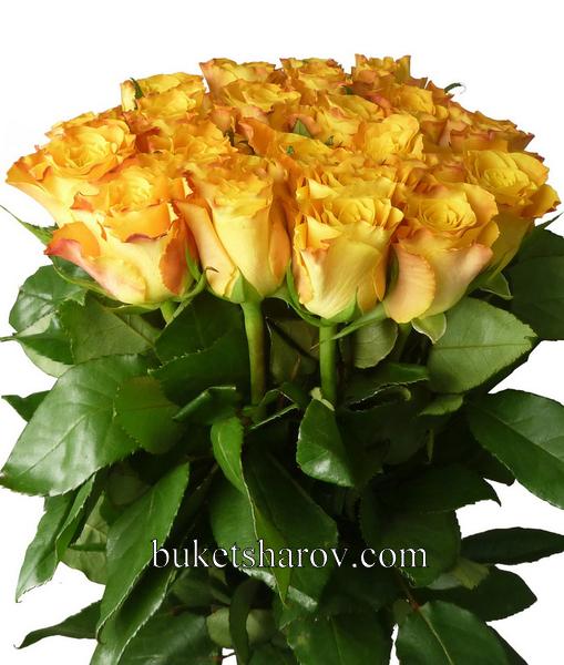 Розы от 19 шт